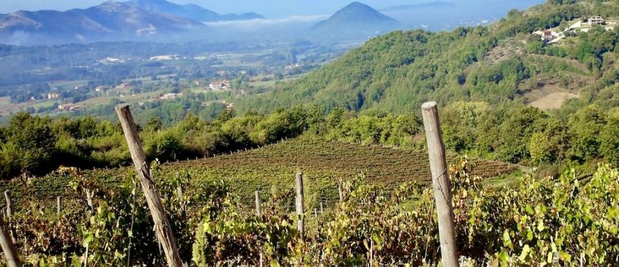 Primitivo Vineyard - Best Italian red wines